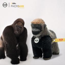 Boogie Gorilla 2.jpg