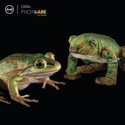 Froggy Frog 2.jpg