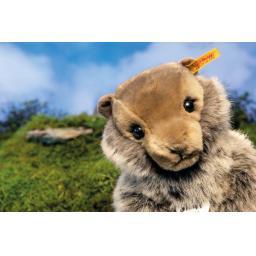 Burri Marmot 3.jpg