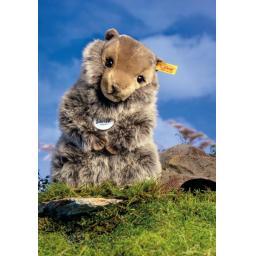 Burri Marmot 2.jpg