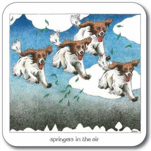Springers in the Air - Coaster