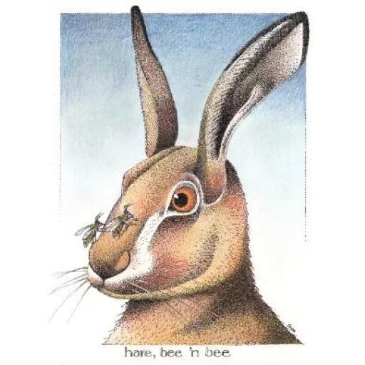 Hare B 'n' B